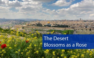 The Desert Blossoms as a Rose